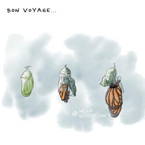 Développement du papillon monarque