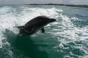 PCB Dolphin tours