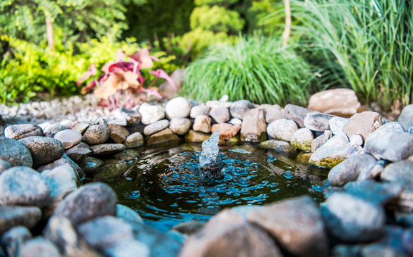 Fountain Backyard