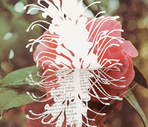 GHOSTED: Grevillea Bankskiii, 2008, hand cut paper, 34.5 x 43 x 10 cm