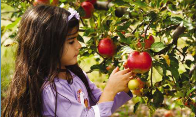 Apple Picking in York Durham Headwaters! Plan Your Next Family Outing Picking Fresh Apples!