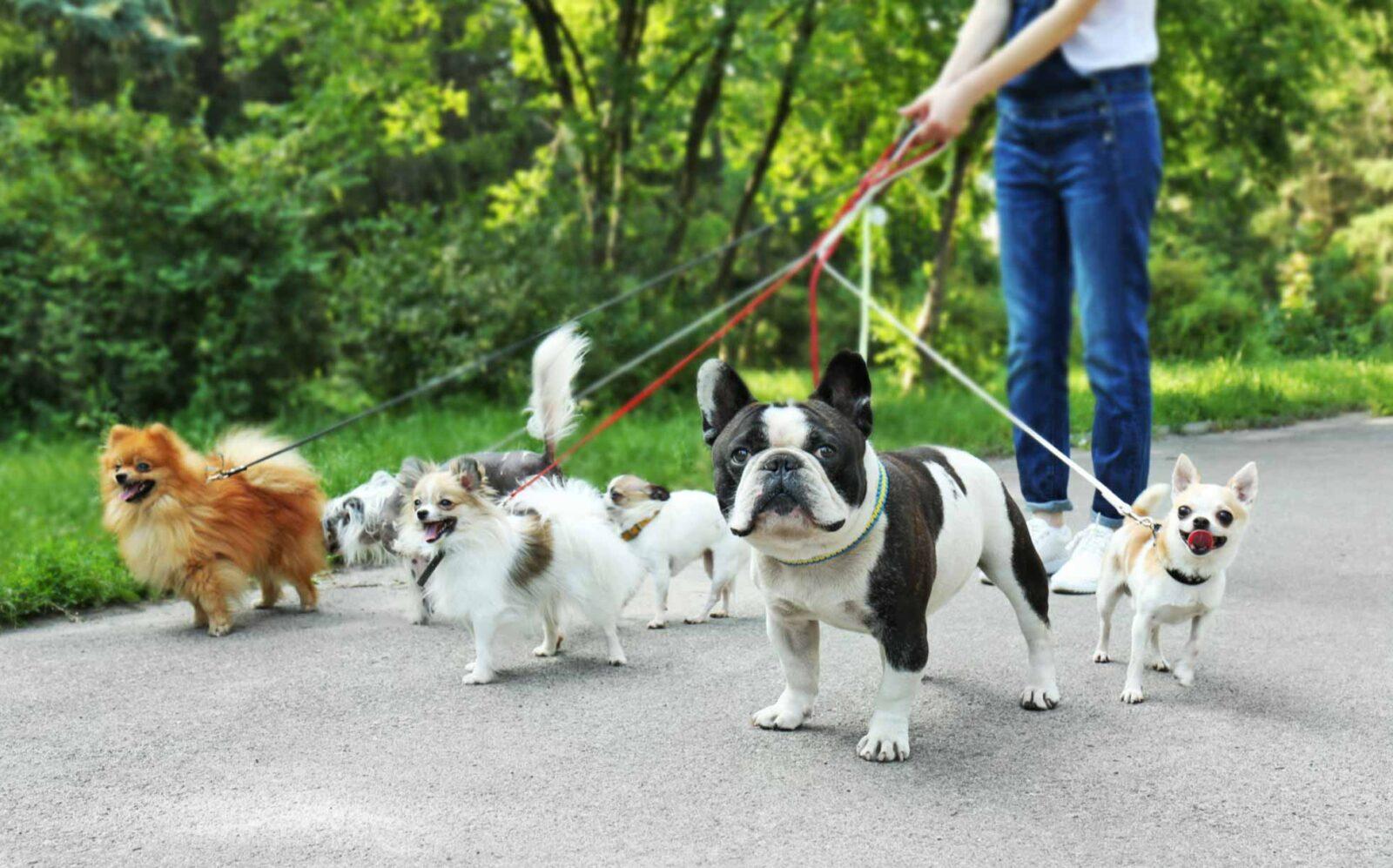 dog walking toronto