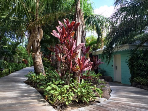 Pretty, lush paths connect the pastel cottages at Guanahani