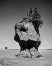 Flower-Pot-Rock