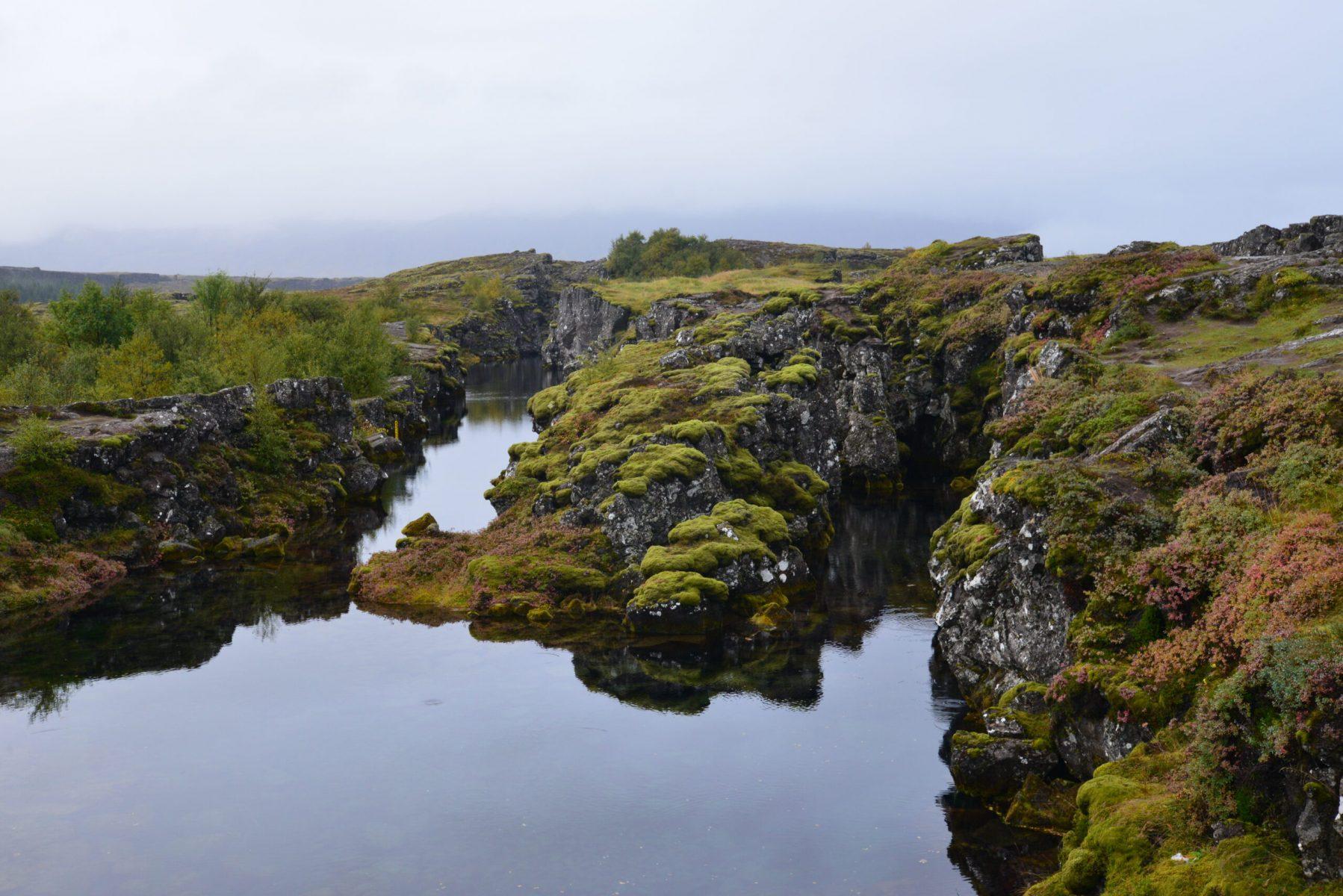 Iceland-Bog