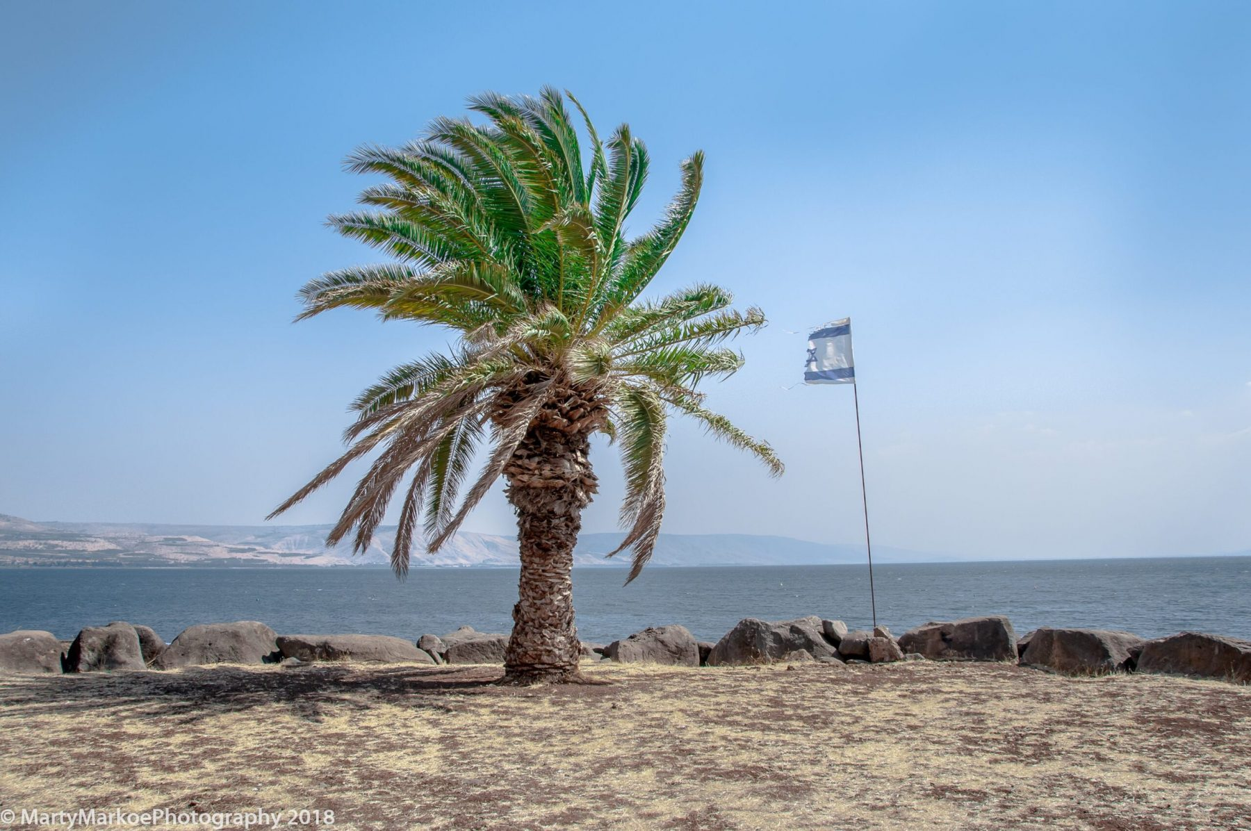 Palm-tree-Sea-of-Galilee