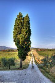 Vineyard-Amorosa-Locanda-dell'Amorosa
