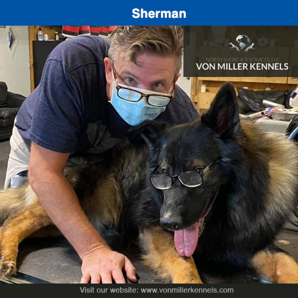 Sherman-7