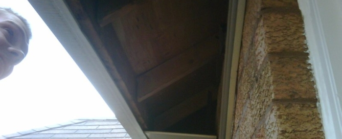 Raccoons Enter Attic from Soffit Oakville