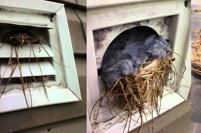 How to Get Rid of Birds in Your Dryer Vents – Now!