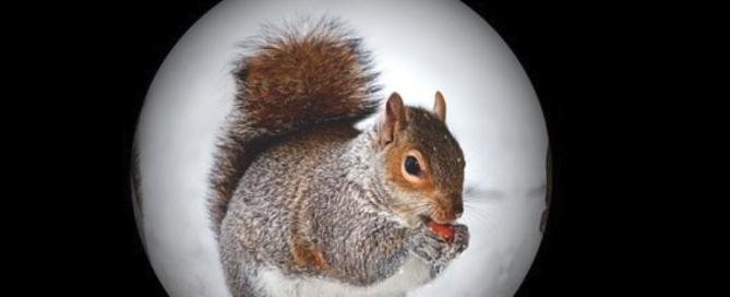 Wildlife Removal Prevention Winterize Home