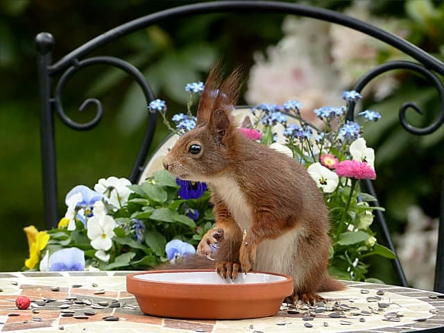 Squirrel Chewing Habits: Their Fun Wreaks Havoc on your Home
