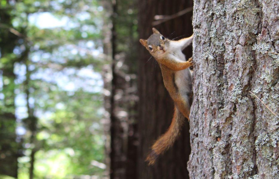 Your Wildlife Prevention Checklist