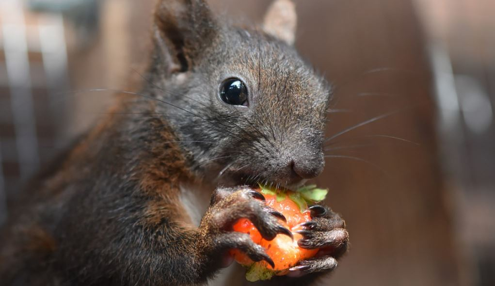 Squirrel Foods Prevention Removal
