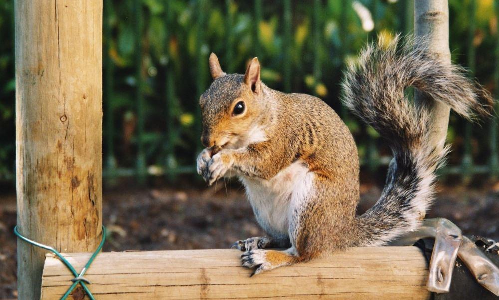Squirrel Nests