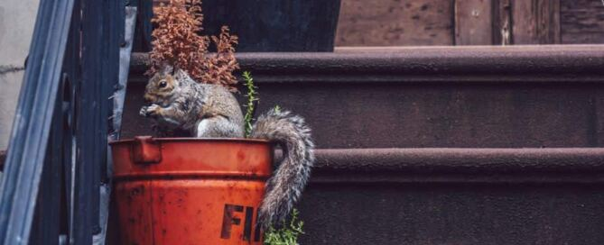 Squirrel at your Home Pest