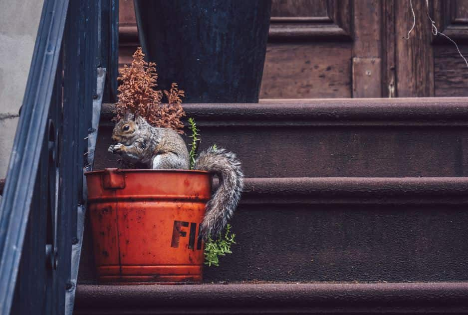 7 Top Tips to Deter Squirrels from Your Home