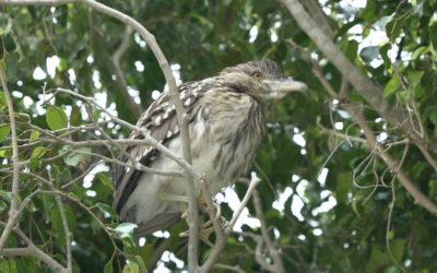 Birds of Los Baños