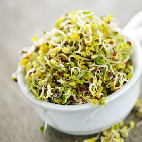 Alfalfa: Why It's One of My Favorite Healing Herbs
