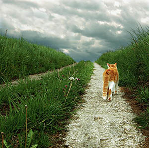 cat on path