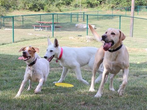 Harrisonburg's New Dog Park