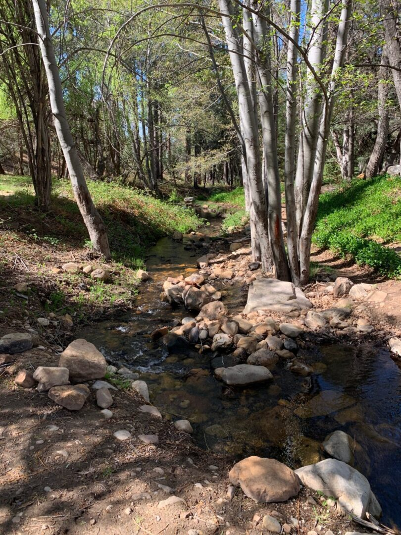 Bonita Creek Stream