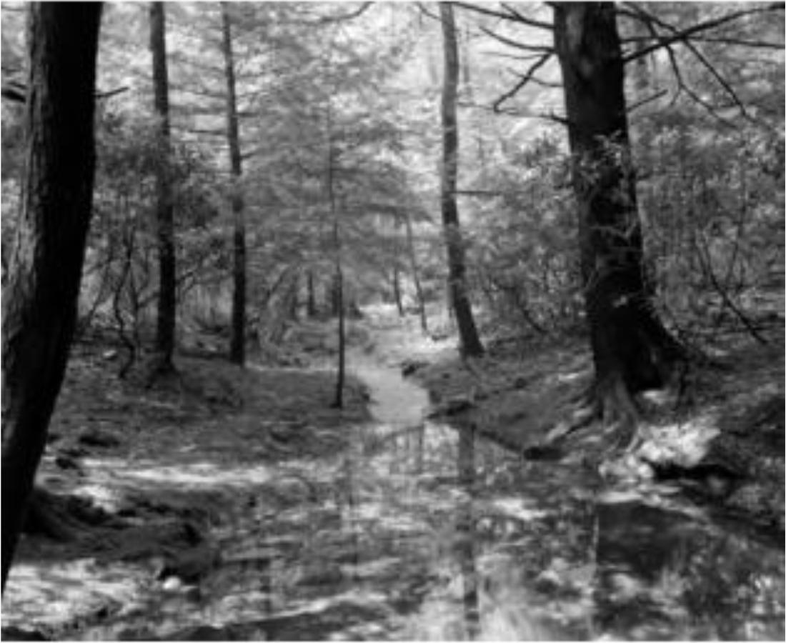 Vinage Creek