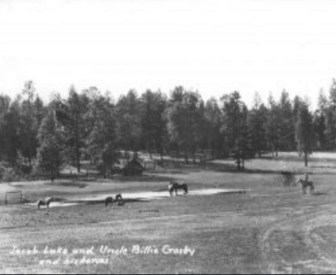 Vintage Field