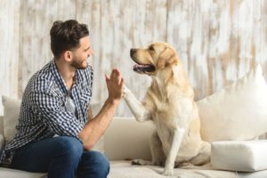 5 Reasons Your Pet Makes a