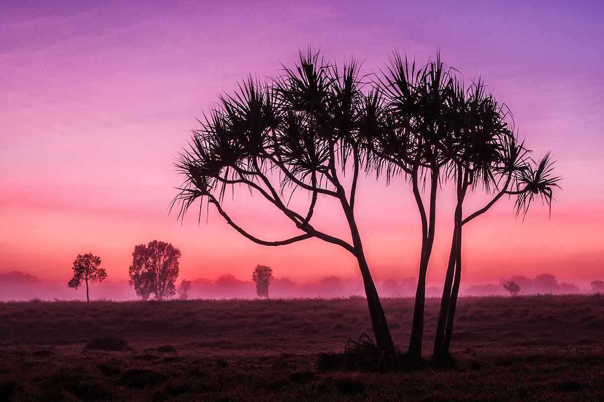 Silhouetted Dawn