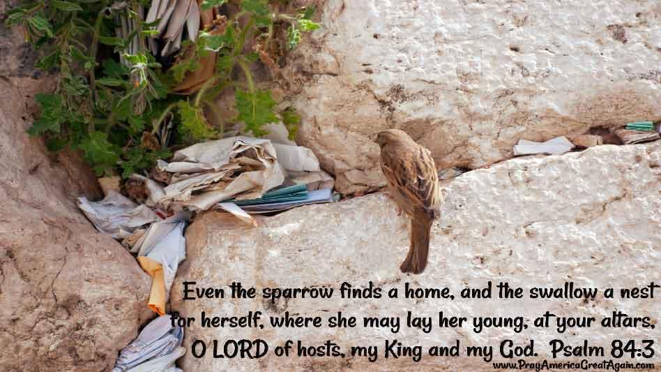 Pray America Great Again Psalm 84_3