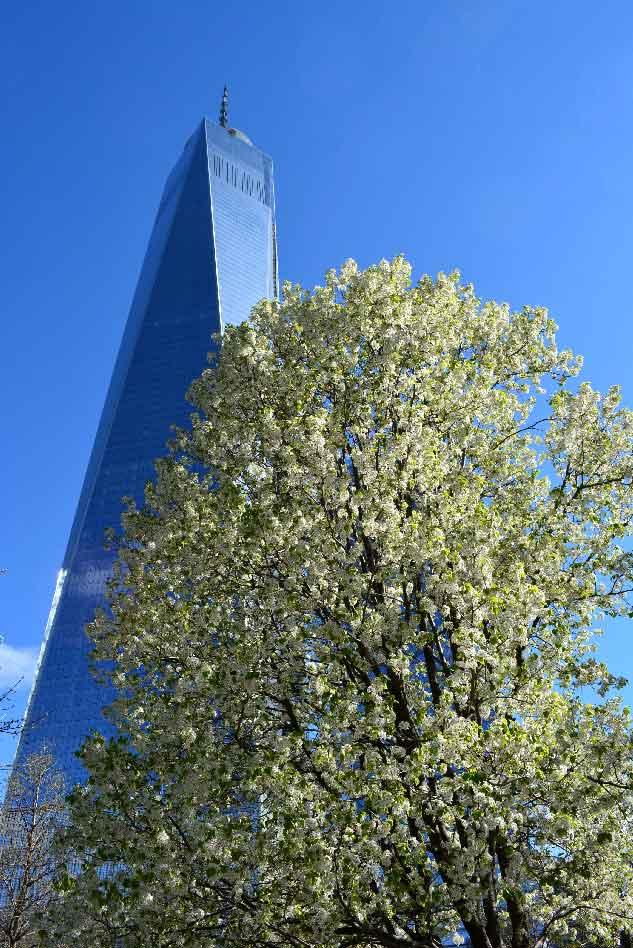 Pray America Great Again 911 Survivor Tree Spring