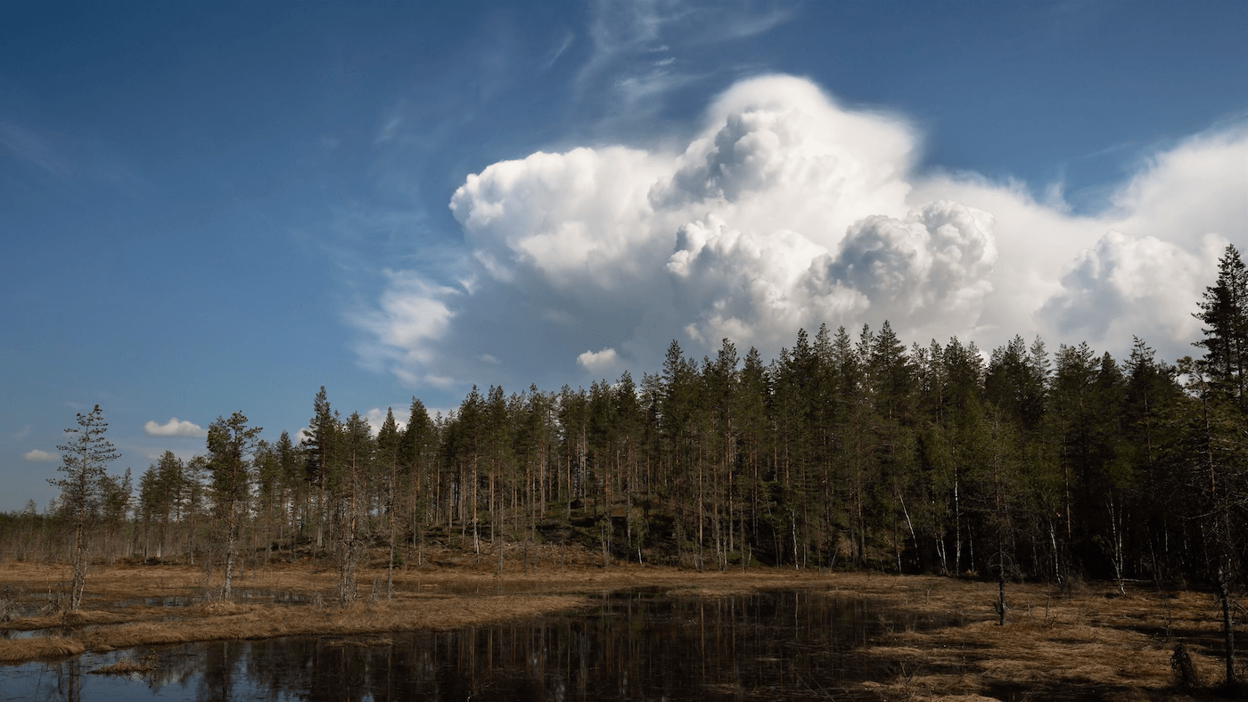 forest with blue sky and clouds