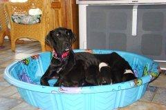 Bonnie & Pups