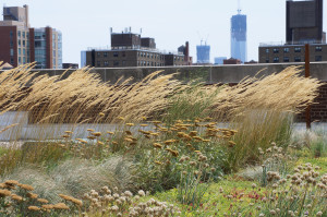 Calamagrostis and Tower 1