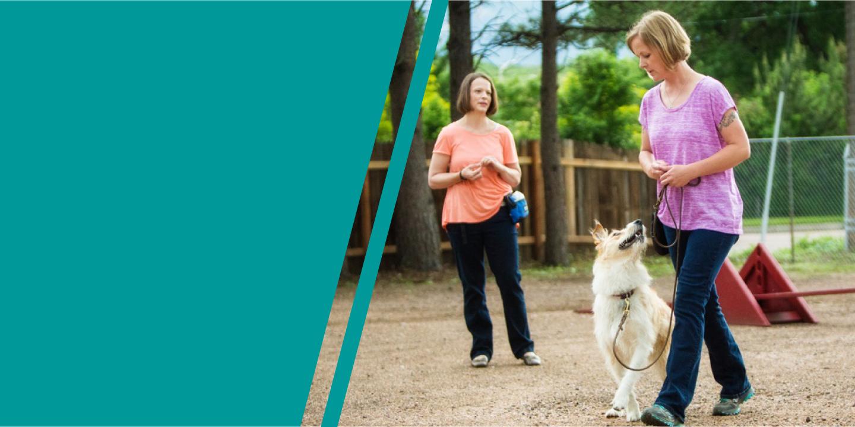 colorado dog works, colorado dog works colorado springs, dog trainer colorado springs, dog training colorado springs, #1 dog trainer colorado, puppy training colorado springs, puppy trainer colorado springs, how to train dogs colorado springs