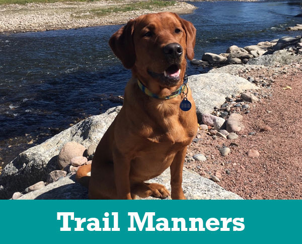 colorado dog works, colorado dog works colorado springs, dog trainer colorado springs, dog training colorado springs, #1 dog trainer colorado, puppy training colorado springs, puppy trainer colorado springs, how to train dogs colorado springs
