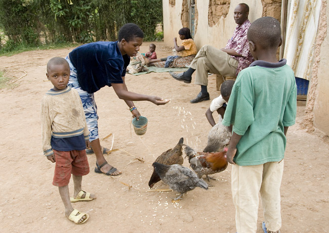 Feeding the chickens. 10-01-07