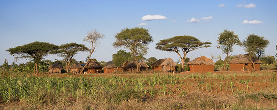 Homestead in Makindu, Kenya. Corn Planted in October Withers in Field.