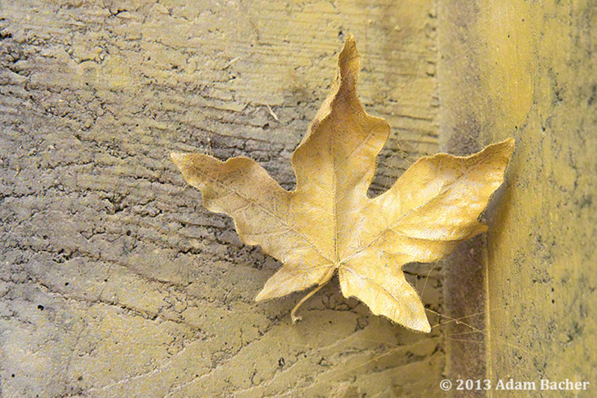 Leaves and Graffiti on a Curious Autumn Day