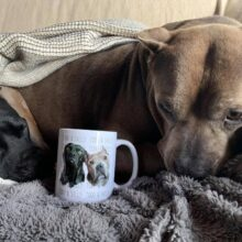 NEW MUGS TO BENEFIT SUFP!