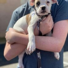 SUFP will be spaying & neutering 4 more pups in LA CITY!