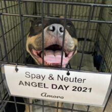 Spay & Neuter ANGEL DAY NEW YORK day 2 HAPPENING NOW!!