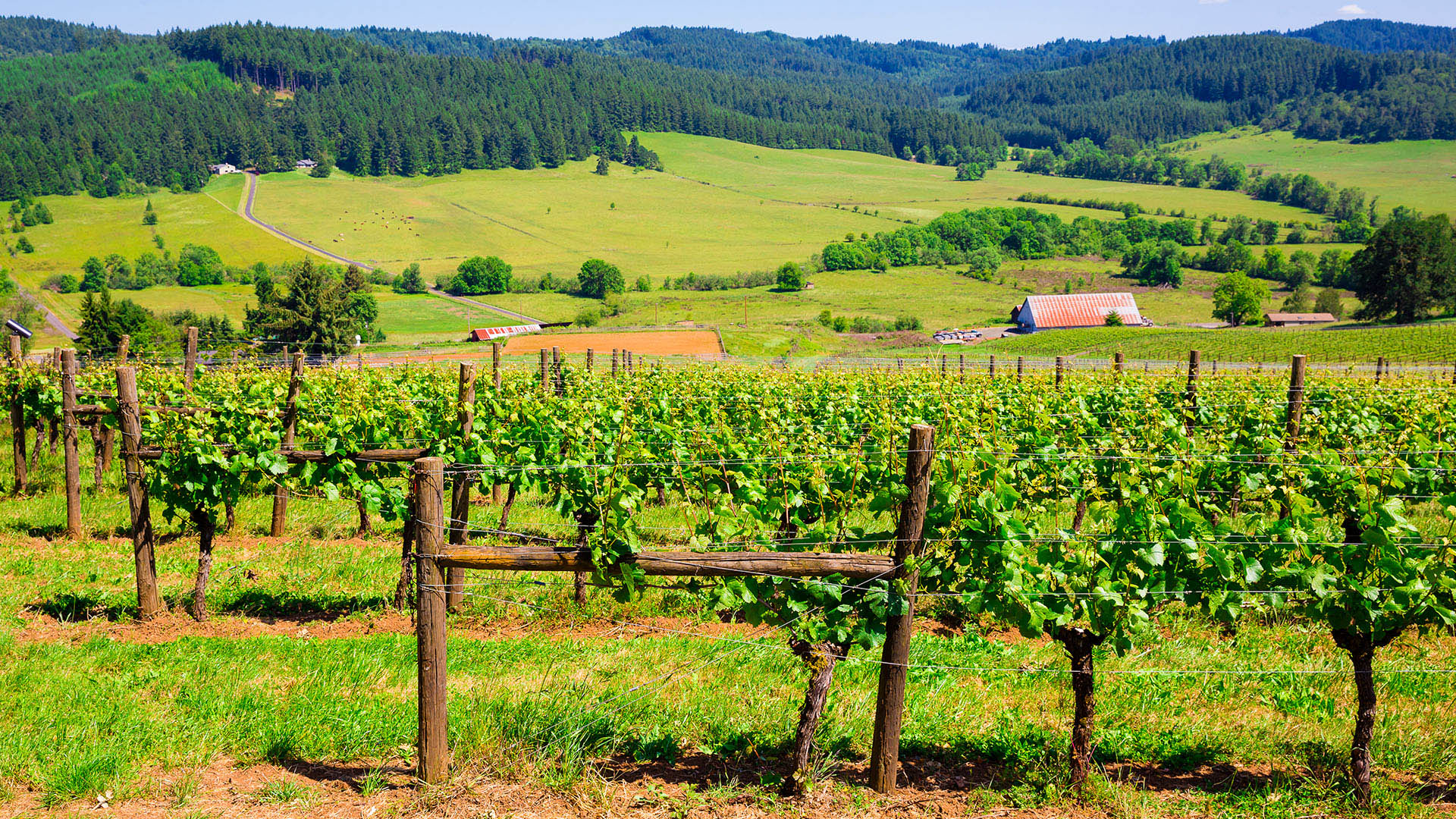 Oregon-Wine-Country
