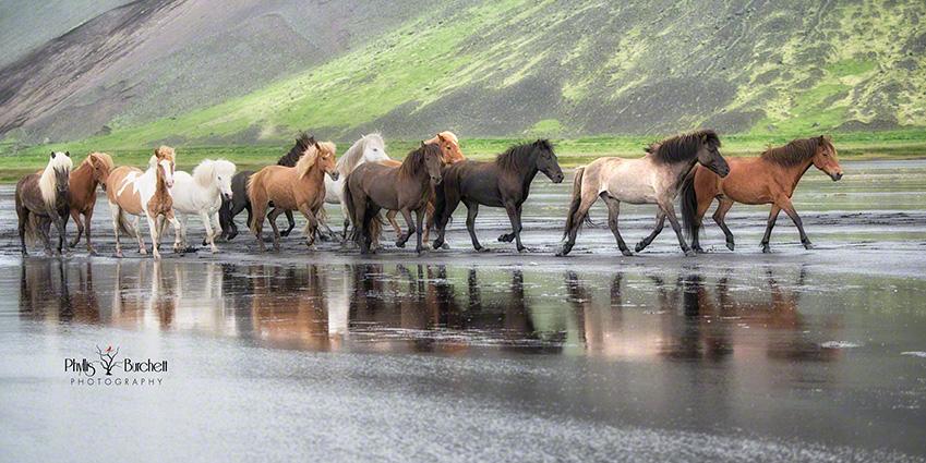 Iceland Equine Tour 2014