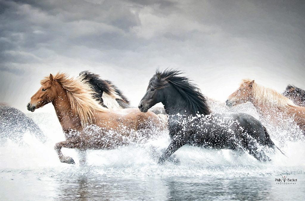 2021 Iceland Equine Photo Tour – June 13-19 one spot open!