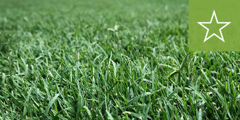 southeast-sod-celebration-bermuda-grass
