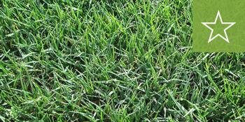southeast-sod-tifway-419-grass