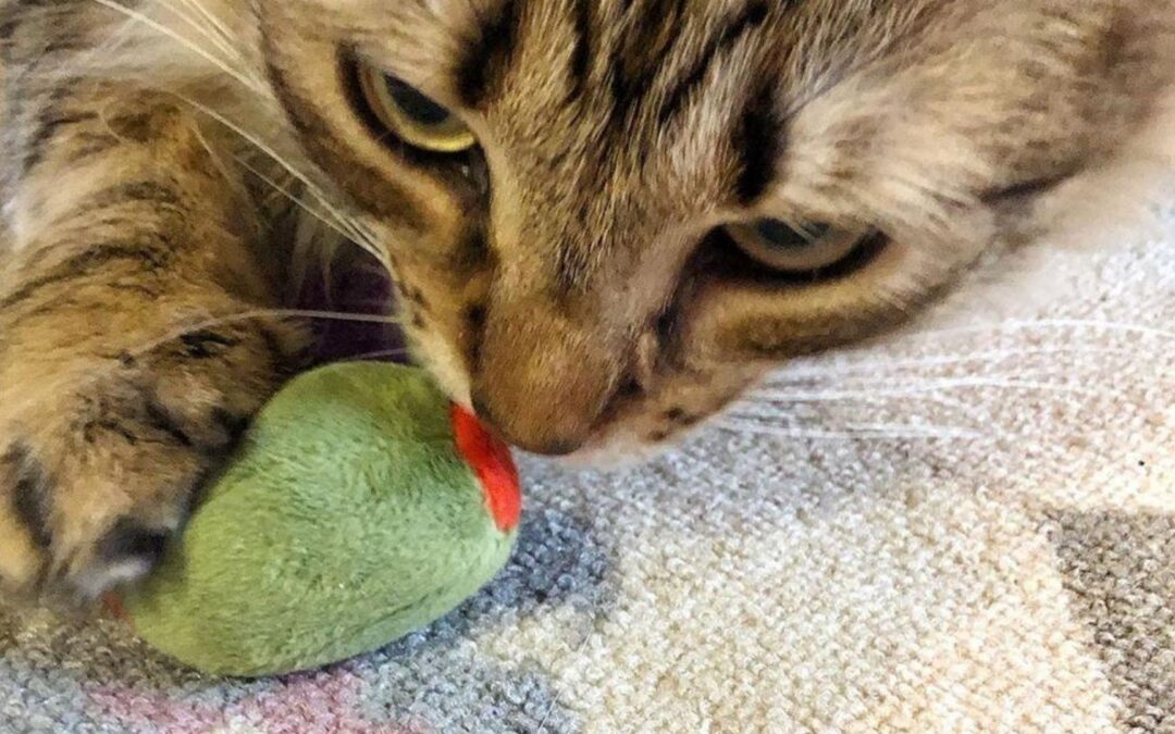 New Catnip Toys for Your Furry Friend