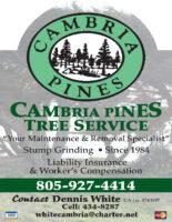 CB Pine Tree QP CDG 2019.jpg